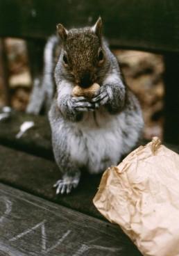 BAG OF NUTS
