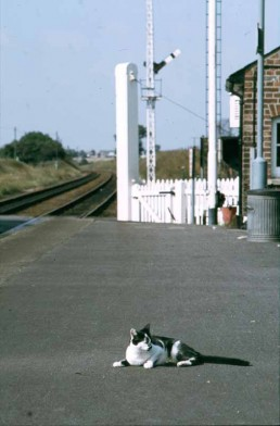 WESTERFIELD STATION CAT LATE 1970'S WHEN THERE WAS STILL A LOCAL GATEKEEPER